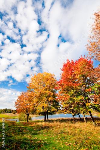 Canvas Prints Honey autumn landscape