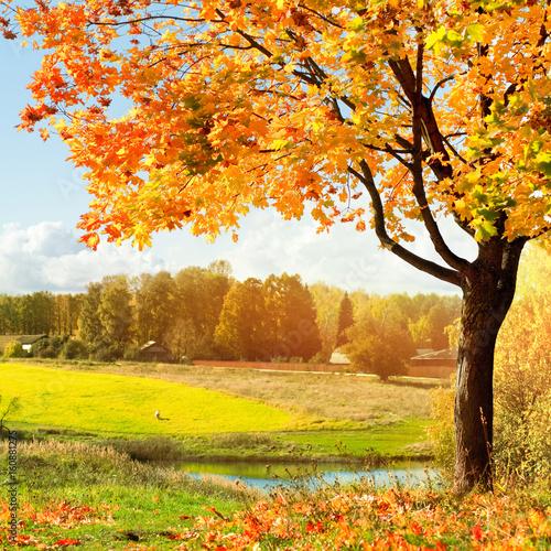 Poster de jardin Jaune Autumn landscape