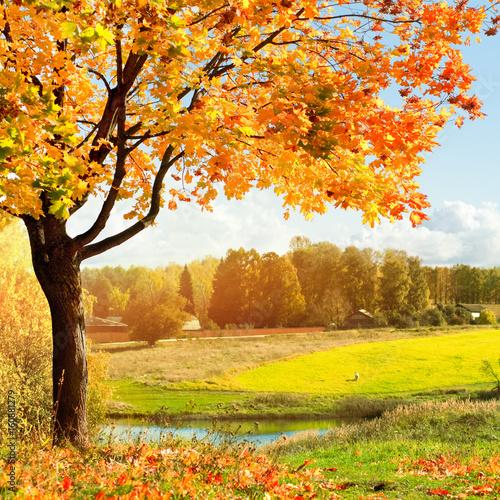 Montage in der Fensternische Gelb Autumn landscape