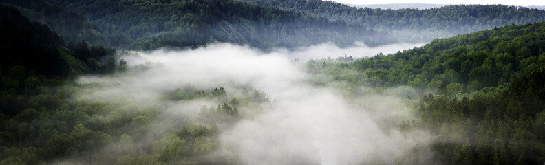 Panel SzklanyMountain forest landscape. Pine trees in the fog in the early morning. Panoramic picture
