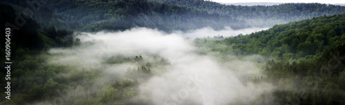 Poster Bleu nuit Mountain forest landscape. Pine trees in the fog in the early morning. Panoramic picture