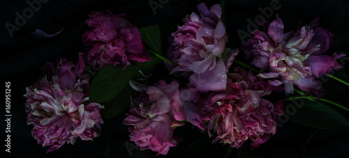 Foto op Aluminium Bloemen Withered pink peonies on a dark background. Low key.top view.banner