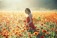 Woman Or Happy Girl In Field Of Poppy Seed
