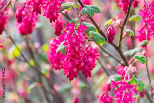 Staande foto Roze Flower