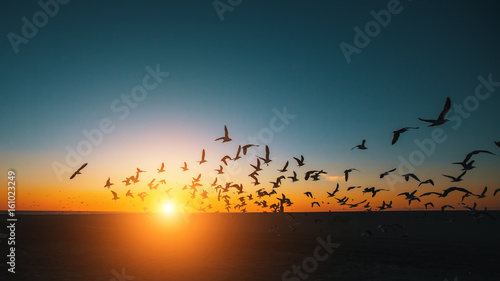 Spoed Foto op Canvas Zee zonsondergang Silhouettes flock of Seagulls over the Sea during amazing sunset.