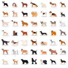 Big Set Of Flat Dogicons