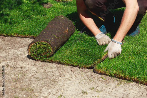Poster Olive Green lawn grass in rolls