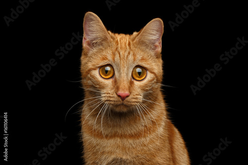 Obraz na płótnie Portrait of Ginger Cat with Huge Sadly Eyes, looking in camera on Isolated Black