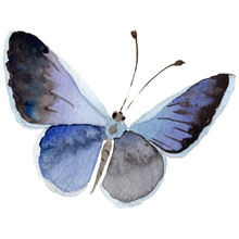 Watercolor Butterfly Tender In...