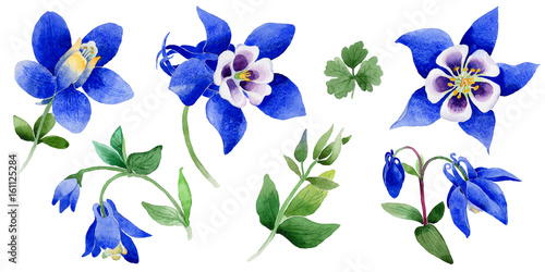 Wildflower Blue aquilegia flower in a watercolor style isolated. Wallpaper Mural