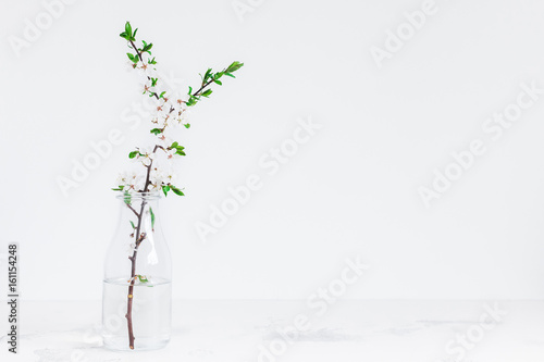 Flowers composition. Apple tree flowers in vase. Front view, copy space