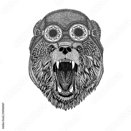 Canvas Prints Owls cartoon Brown bear Russian bear wearing aviator hat Motorcycle hat with glasses for biker Illustration for motorcycle or aviator t-shirt with wild animal