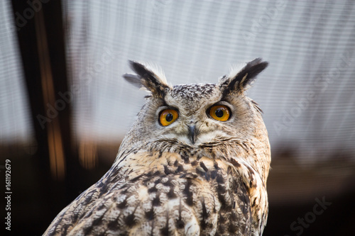 Keuken foto achterwand Uil Portrait of an eagle owl at the zoo