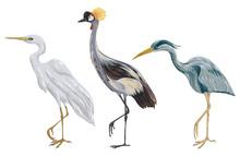 Heron Birds Set. Marsh Fauna. ...