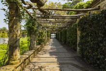 A Trellis Walkway Leading To H...