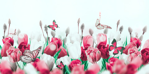 FototapetaMulti-colored tulips with willow and butterflies. Easter flowers, floral background.