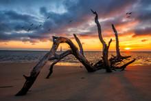 Driftwood And Sunrise Along The South Carolina Coastline