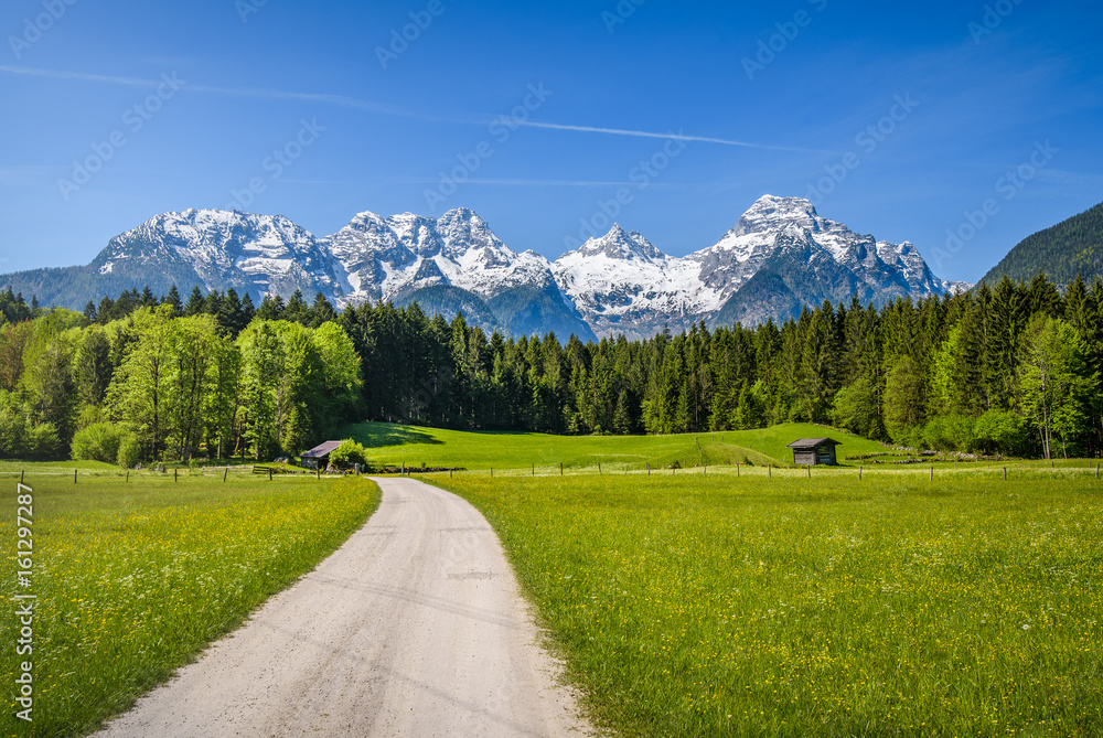 Fototapety, obrazy: Idyllic alpine landscape, blooming meadow with snow-covered peaks in the background, Salzburger Land, Austria