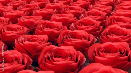 uniformly-packed-grid-of-red-roses