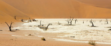 Wide-cropped View Of The Deadvlei Salt Pan And Petrified Trees In The Sossusvlei Wildlife Reserve In Namibia.