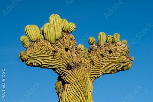 duzy-kaktus-na-niebieskim-tle