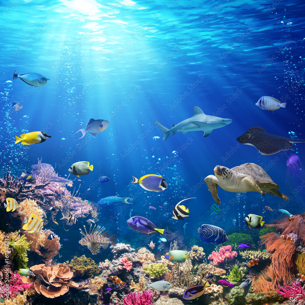 Fototapeta Underwater Scene With Coral Reef And Tropical Fish
