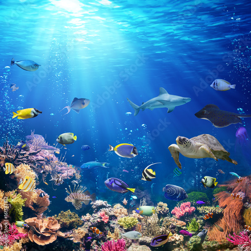 Poster de jardin Recifs coralliens Underwater Scene With Coral Reef And Tropical Fish