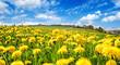 Glück pur: Frühlingserwachen, Blütenpracht, Auszeit, Meditation, Entspannung auf sommerlicher Wiese mit Löwenzahn :)