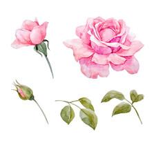 Watercolor Roses Vector Set