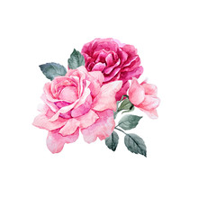 Watercolor Vector Roses Compos...