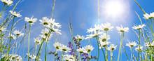 Frühlingserwachen: Meditation...