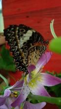 Farfalla Posata Sul Fiore Con Sfondo Rosso