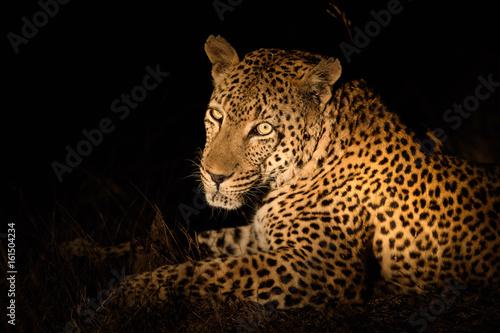 Plakat Zwierzęta w Djuma Sabi Sands w RPA