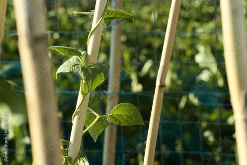 Fotografie, Obraz  Sostegno di bambù