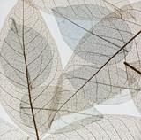 Przejrzysta tło tekstura kolorowi Susi kwieciści liście - 161532203