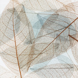 Transparent backdrop texture of colorful Dry floral leaves - 161533417