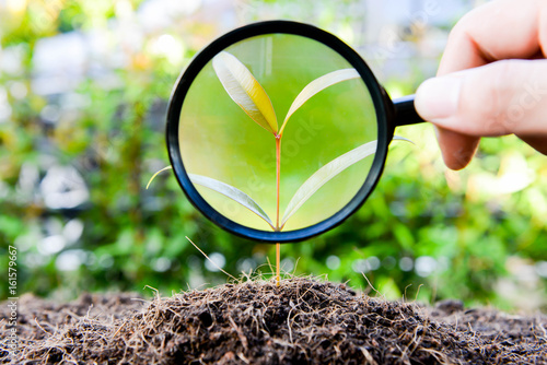 human hand is using magnifying glass to the growing plant Canvas Print