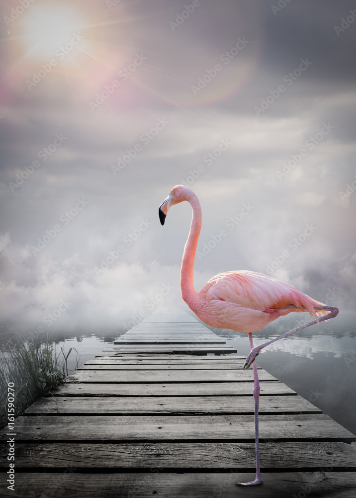 Flamant rose monde imaginaire