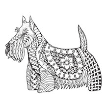 Scottish Terrier Dog Zentangle Stylized, Vector, Illustration, Freehand Pencil, Hand Drawn, Pattern. Zen Art. Black And White Illustration On White Background. Adult Anti-stress Coloring Book.