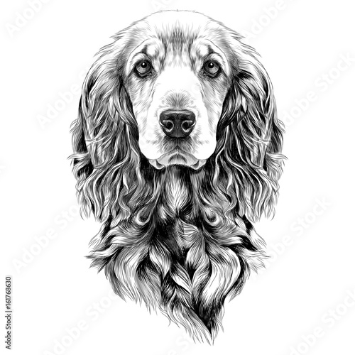 dog-breed-cocker-spaniel-muzzle-sketch-vector-graphics-black-and-white-drawing