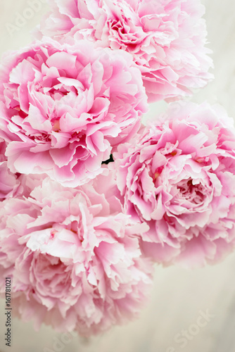 Pink Peony Close Up. Abstract Image
