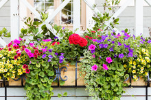 Colorful Flower Boxes In Front...