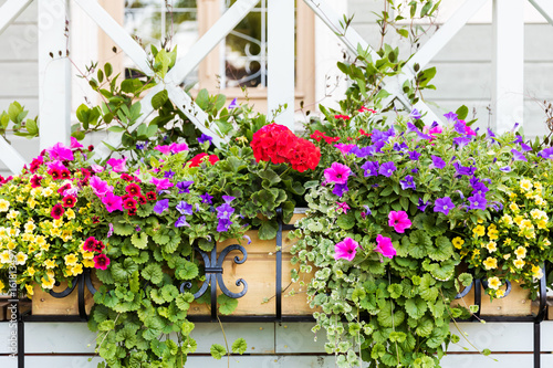 colorful flower boxes in front of house