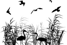 Gulls Above Two Herons Between...