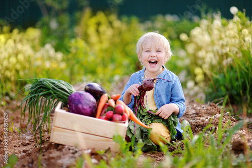 Fotografie, Obraz  Cute little boy holding fresh organic beet in domestic garden
