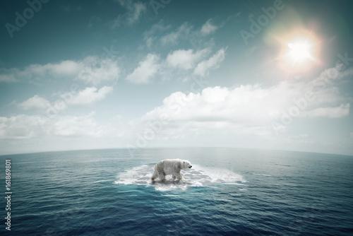Fotografie, Obraz  Ours polaire sur une petite banquise au milieu de l'océan