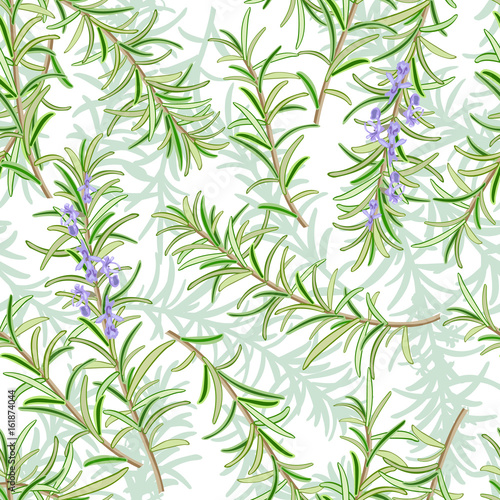 Rosemary or Rosmarinus officinalis Canvas Print