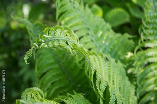 Papiers peints Cactus Fresh leaf fern. Close-up. Selective focus. Abstract background.