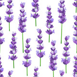 Seamless pattern of provence violet lavender flowers on a white background. Vector illustration. - 161883000