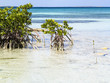 Paradise beach in Cayo Santa Maria, Cuba. View of a perfect desert coast with white sand, mangroves and blue turquoise sea.